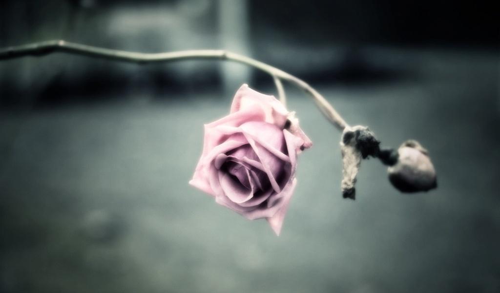 Грустный цветок картинка 2