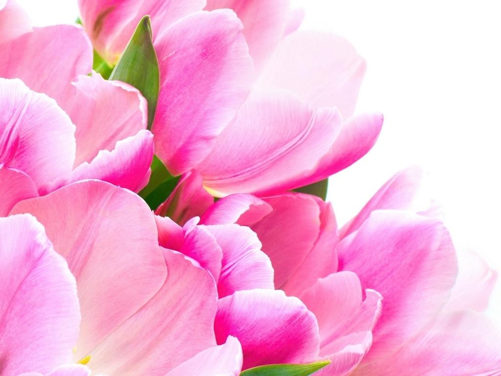 Картинки для мамы цветы 1