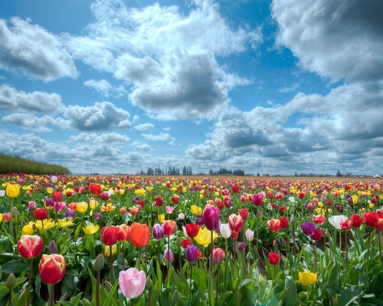 Облака небо пейзаж природа цветы