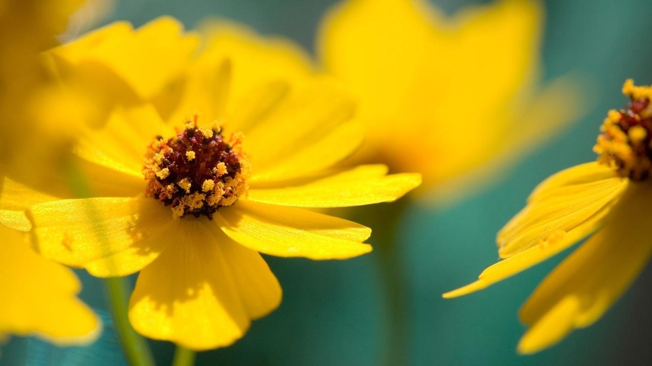 Желтое настроение Трииночка