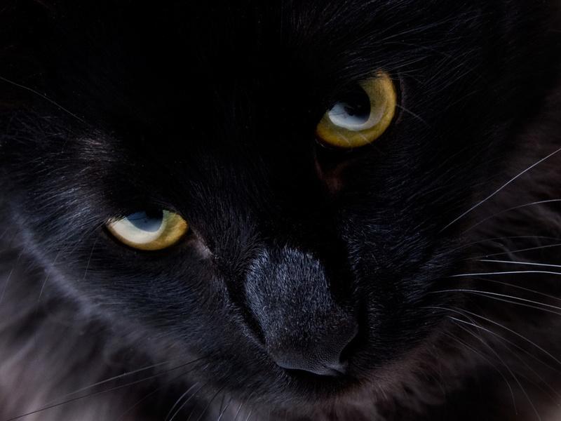 желтые глаза, черная шерсть, усики, животные, кошка, взгляд, кошачьи, глаза, макро