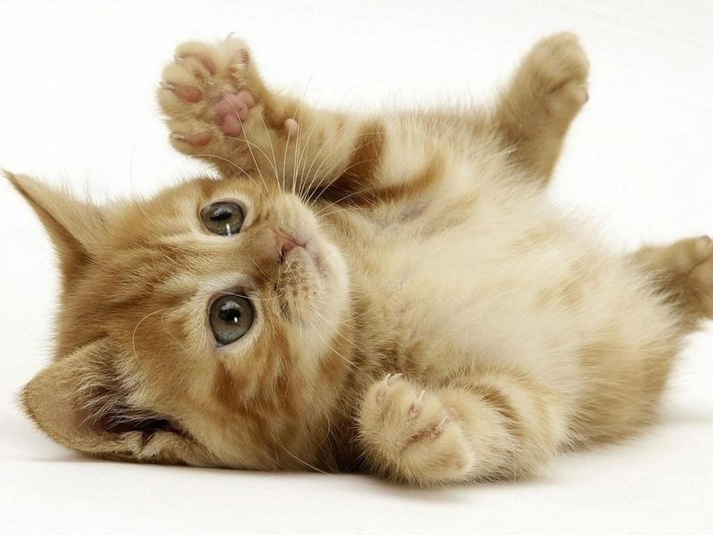 рыжий котенок, игра, полоска, животные, взгляд, котята, кошачьи, глаза