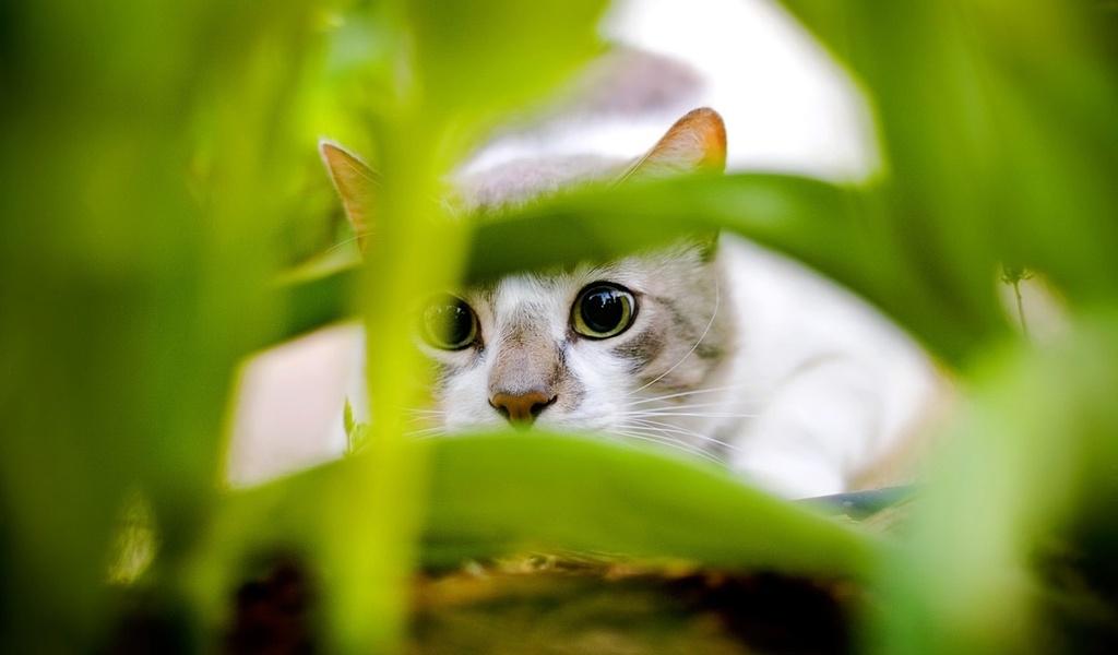пристальный взгляд, котик, зеленая травка, животные, взгляд, кошачьи, глаза
