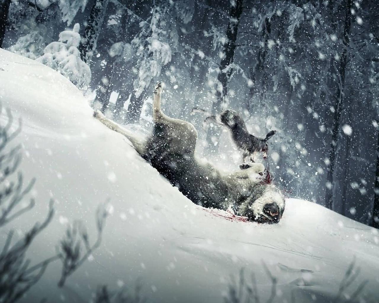 Зима снег охота дичь дикая природа