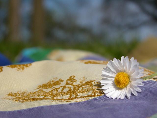 покрывало, белая ромашка, солнышко, цветы, макро, лето