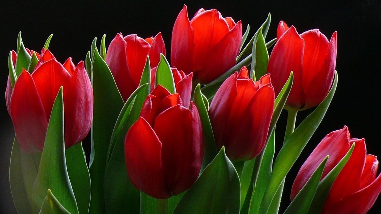 есть картинки тюльпаны