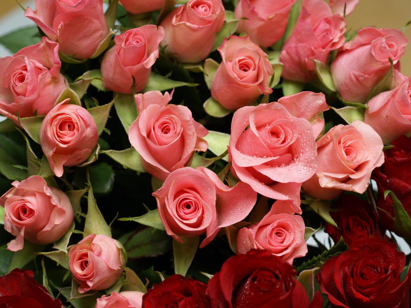Розы цветы разные букет розы розы