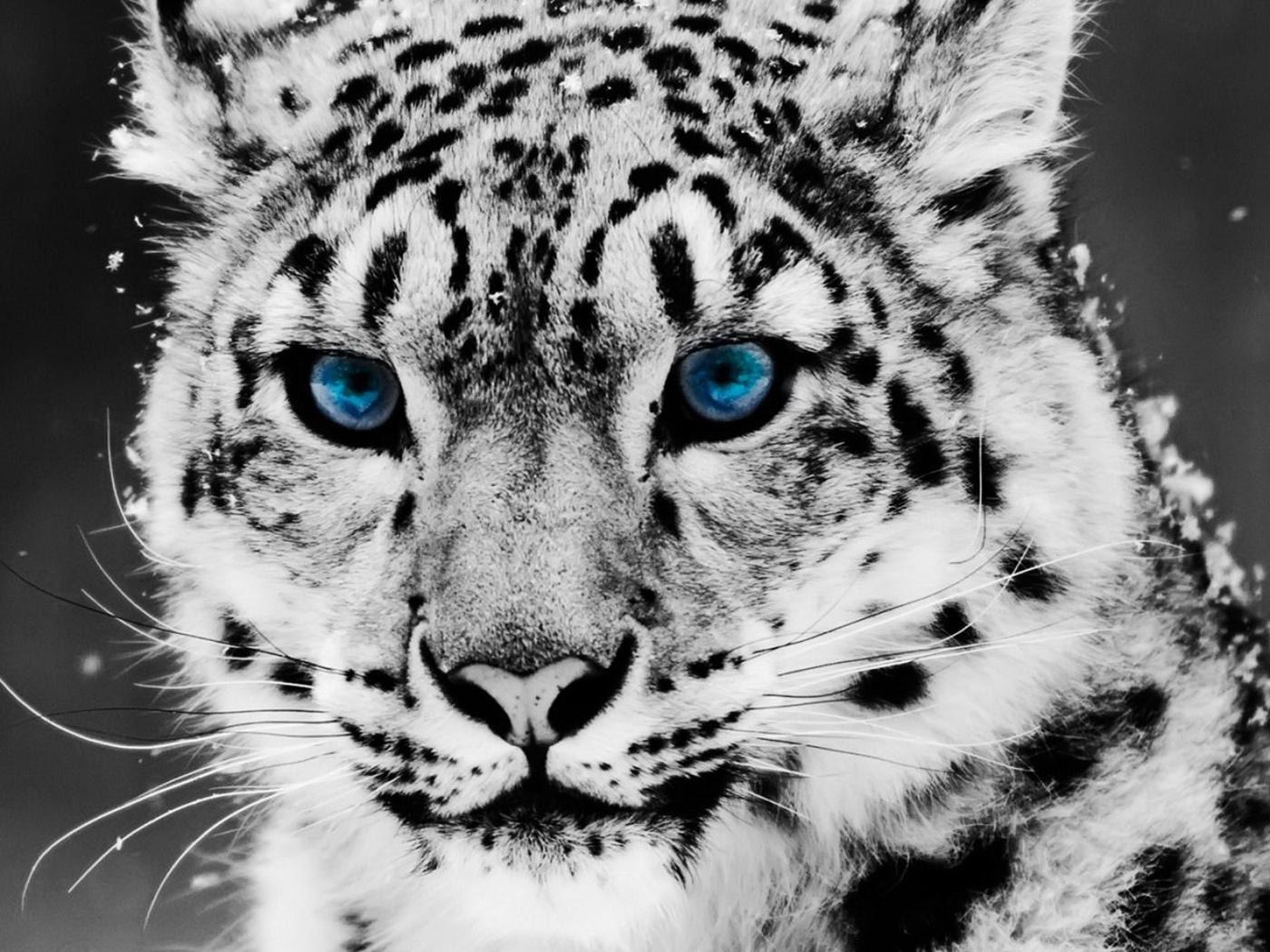 Картинки синие глаза девочки - b707