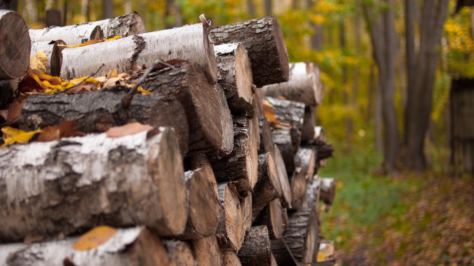 Обои дрова. Пейзажи foto 6