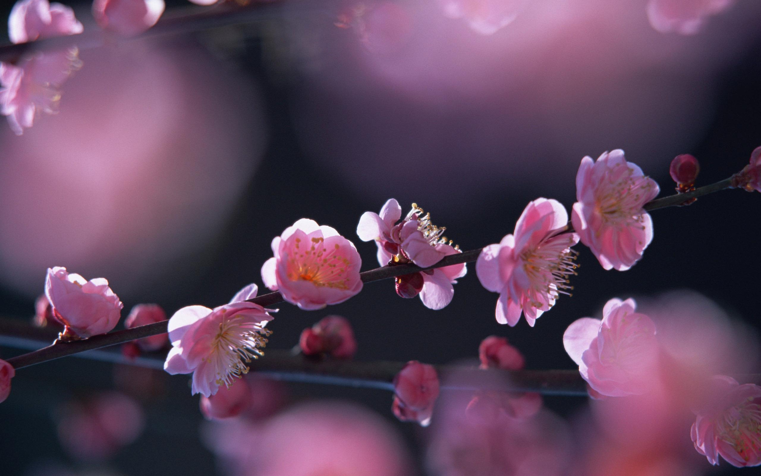 картинки природа красивые цветы