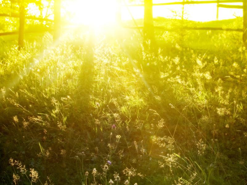 Весна, spring wallpapers, весенние картинки для рабочего стола, весенние обои, красивые фото, природа, трава, заборы, утро, солнце, свет, лучи, лето, летние обои, рассвет