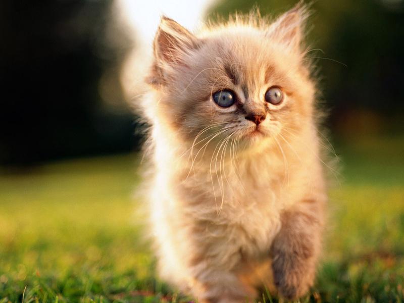 Котенок, трава, пушистый, мордочка, кроха, травка, животные, взгляд, котята, кошачьи, глаза