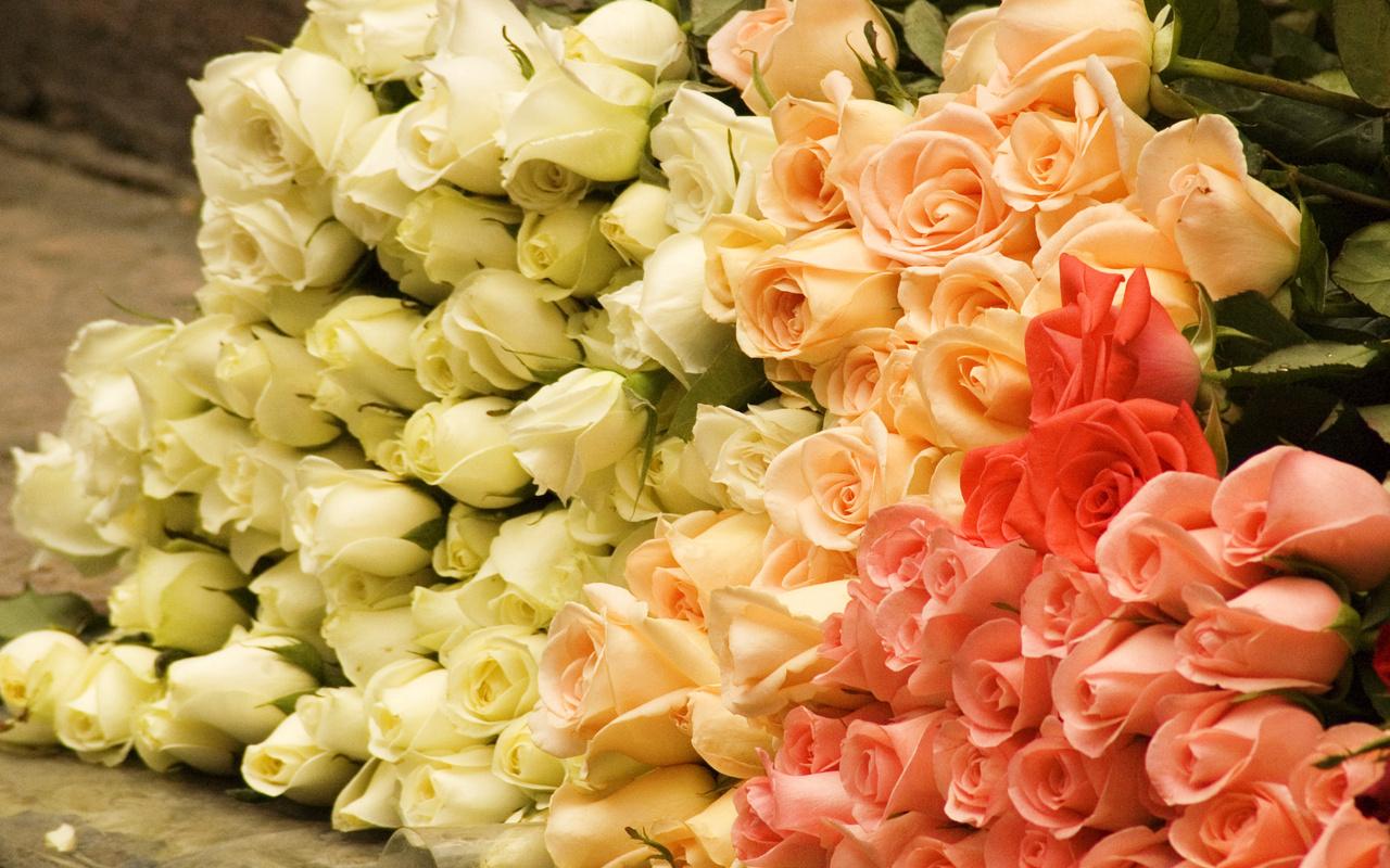 Цветы букет розовые розы чайные розы