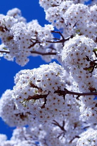 Цветение весна небо ветка цветы