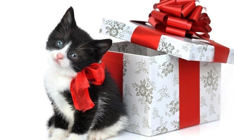 Подарки в контакте простые