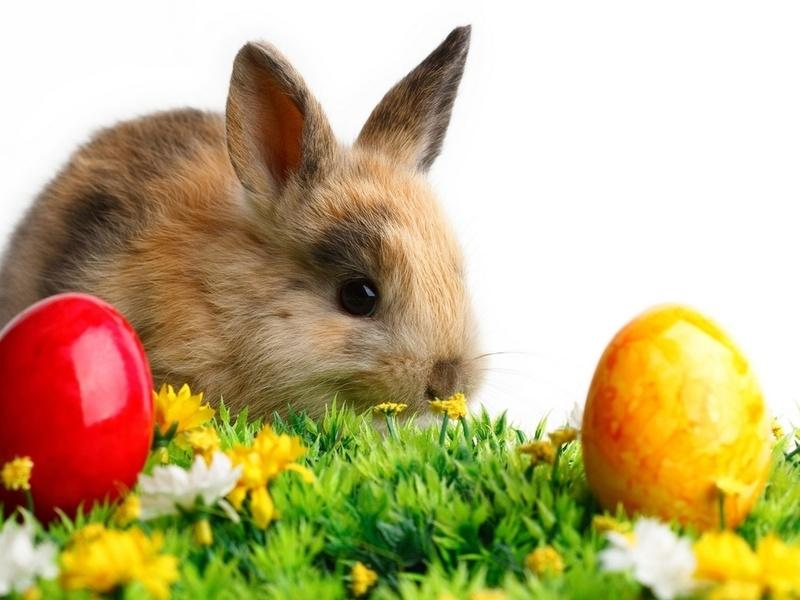 Цветные, животное, кролик, цветы, пасха, яйца, трава, животные, праздники