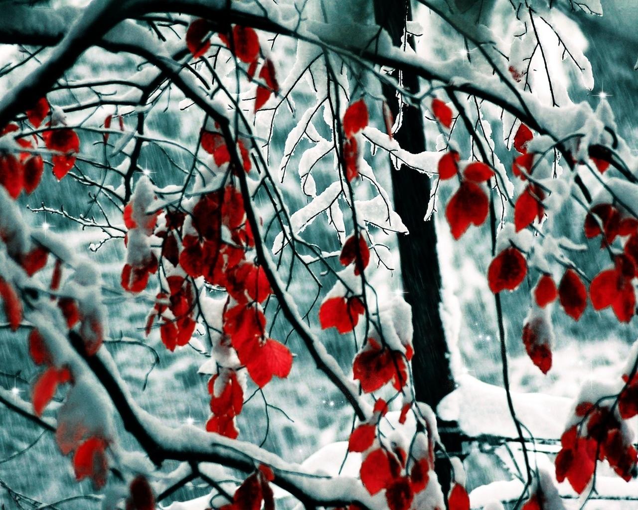 зима, листья, снег, snow, nature, ветки, winter, деревья, Природа