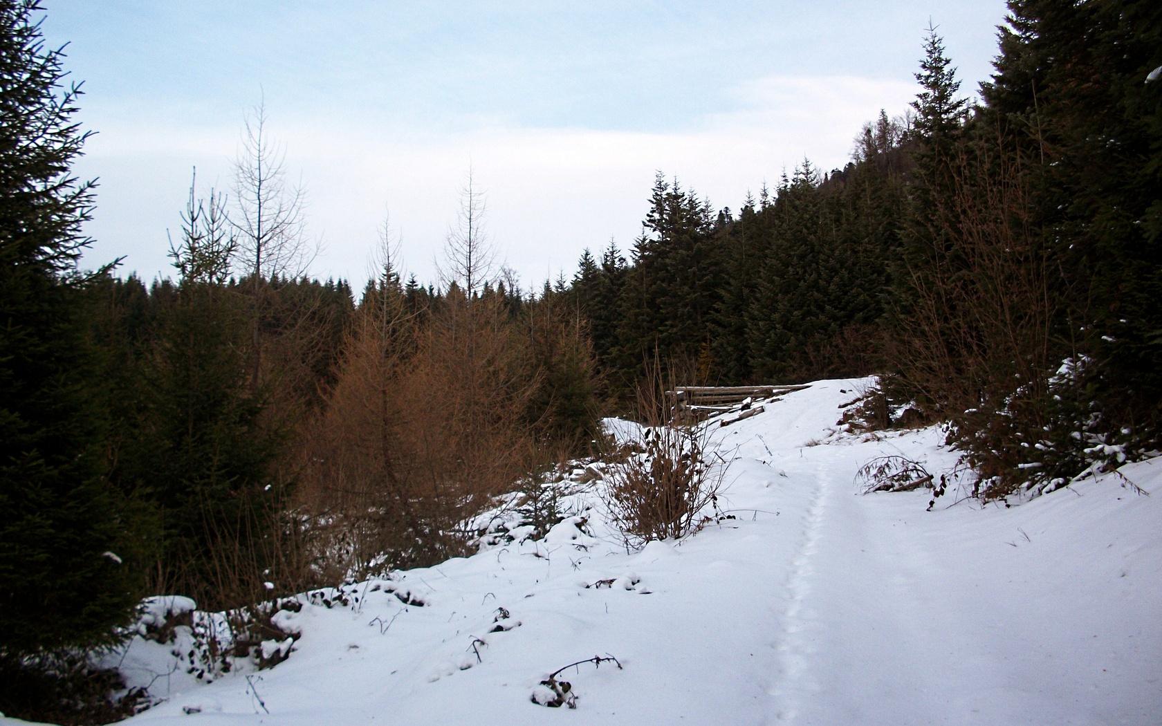 зима, лес, ёлки, небо