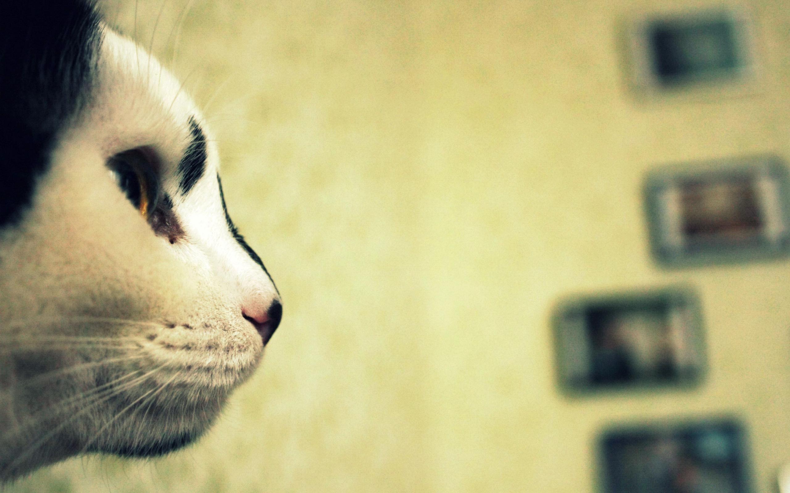 нос, морда, взгляд, котэ, Кот, кошка