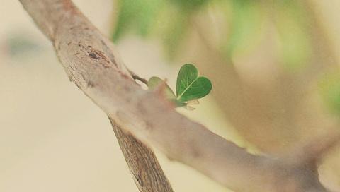 Макро, ветка, настроение, дерево, деревья, ветви, ветки