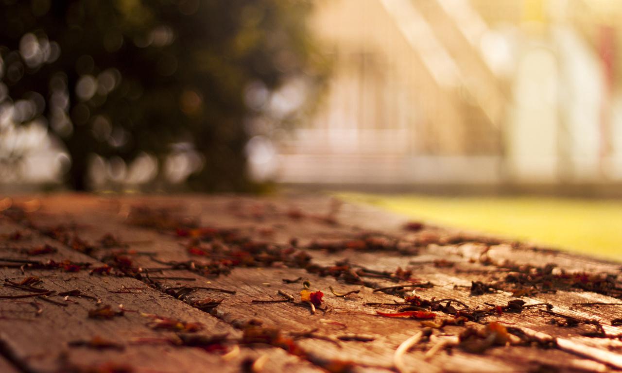осенние обои, опавшие листья, Макро обои, осень обои