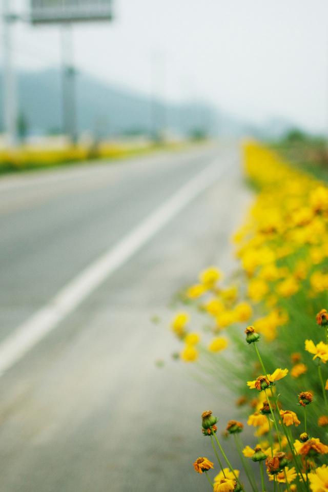 самая популярная желтые цветы у дорогои сожалению, Анапы Анапу