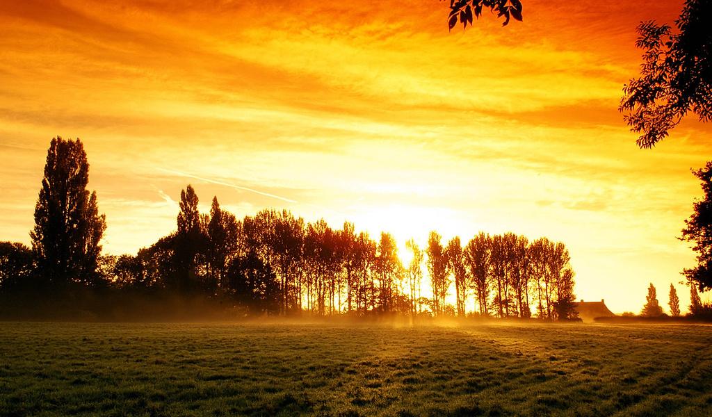 деревья, природа, Закат,