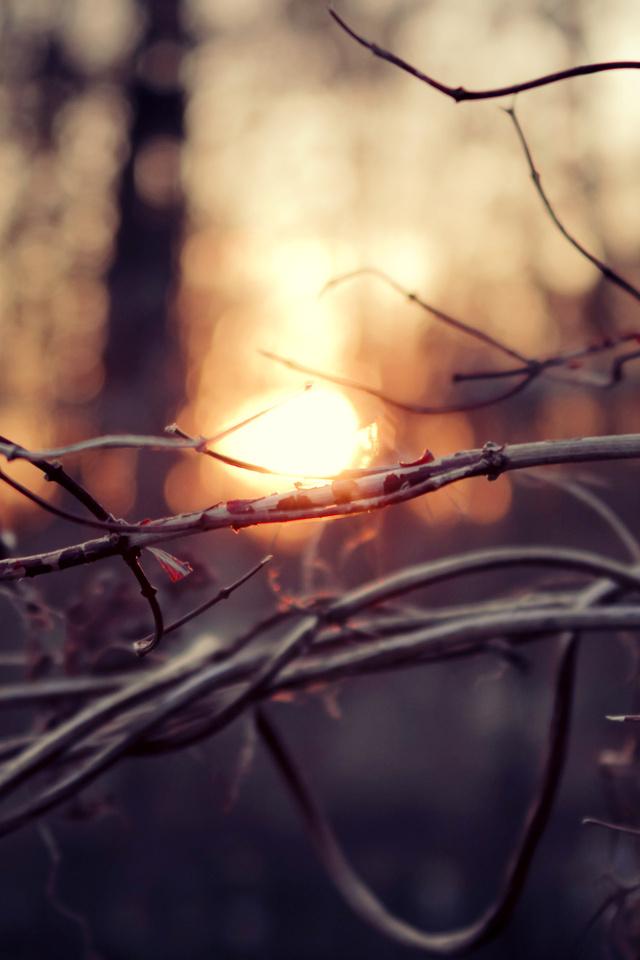 Ветви, макро, осень, ветки, закат, деревья, солнце, лес