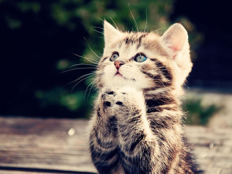 котенок, попрошайка, Кот, лапки, бедолага