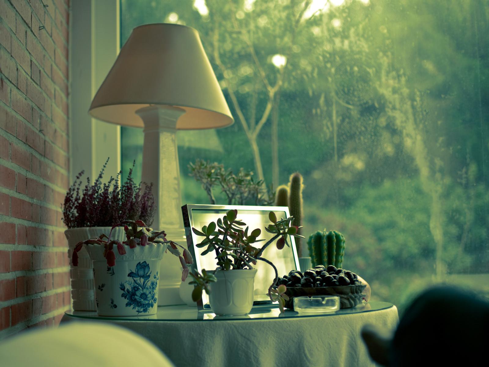 Растения дома