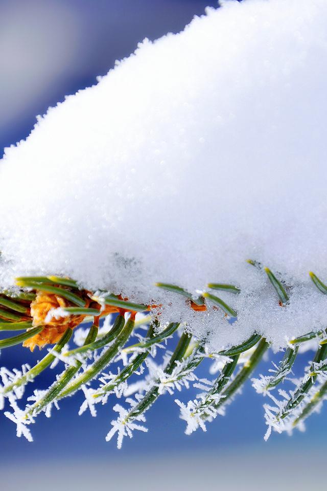 как еловые ветки в снегу 480 800 отводит влагу поверхности