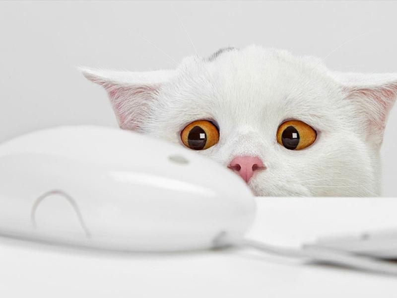 мышка, белый кот, желтые глаза, испуг