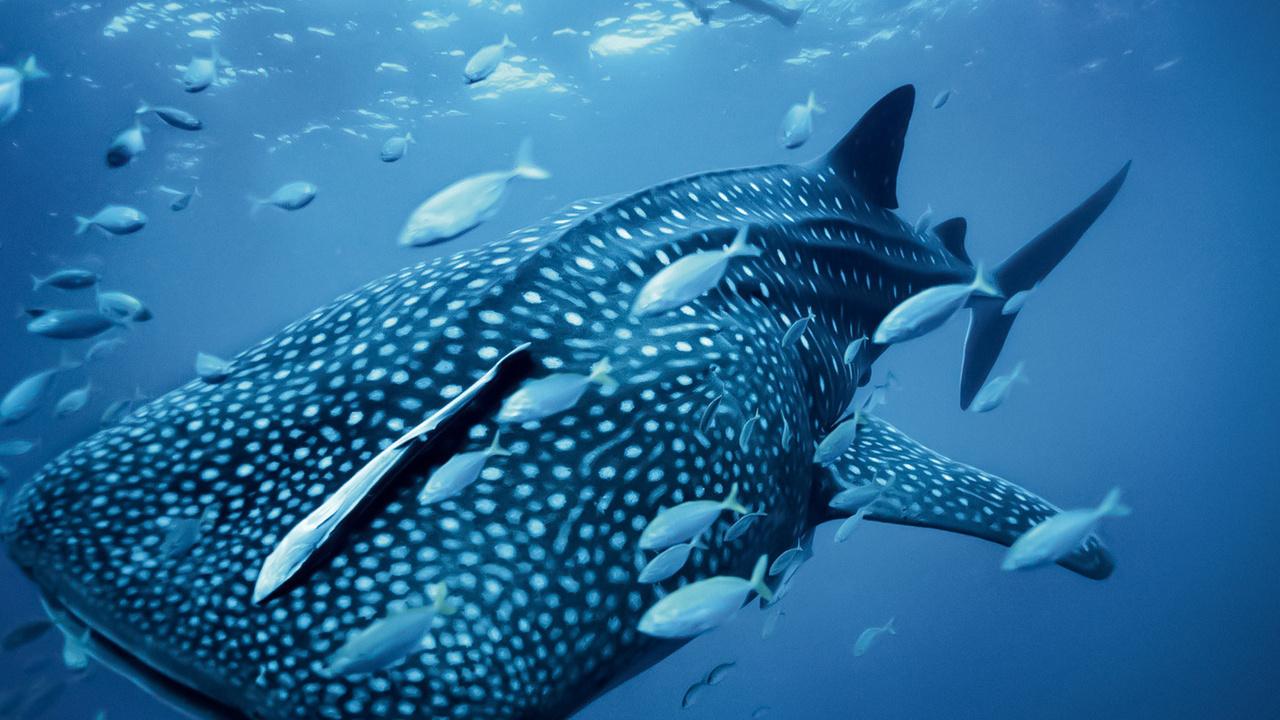 fish, whale, blue, ocean, sea, кит