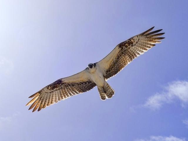 Стихотворения про птиц для дошкольников