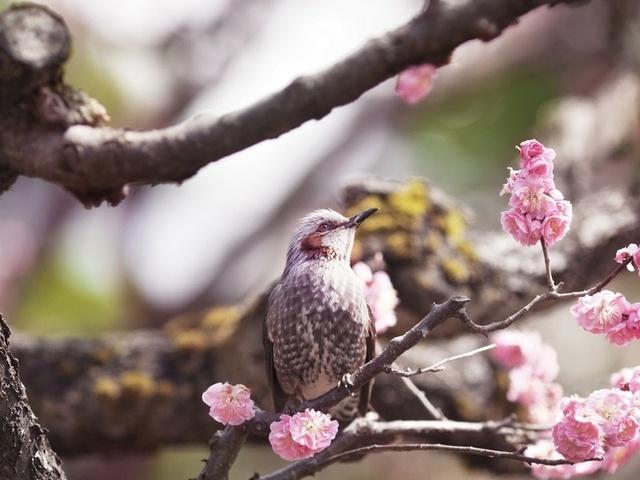Скачать Картинки весна птицы 4