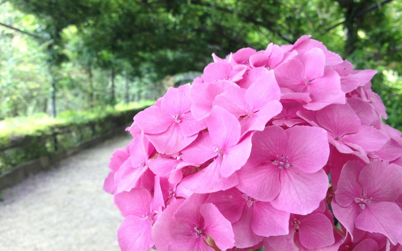 флоренция, италия, аллея, цветы