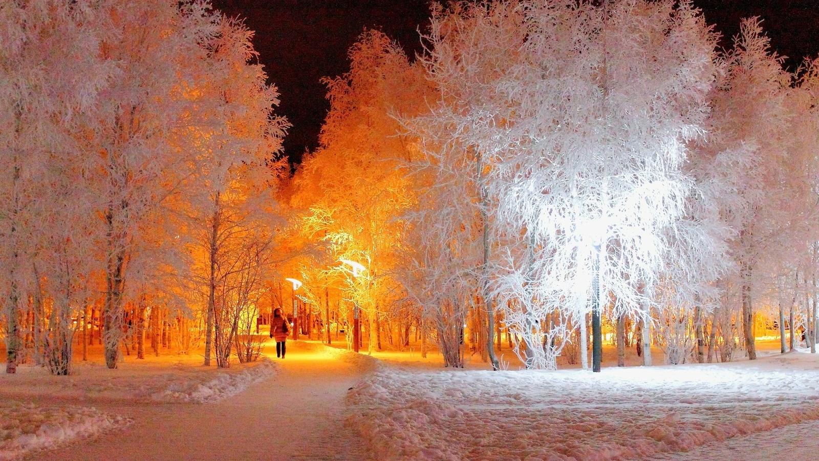 деревья, ночь, иней, зима, парк, фонарь