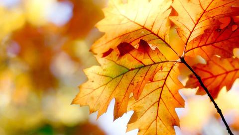 nature, листья, осень, leaves, боке, bokeh, краски, Природа, autumn