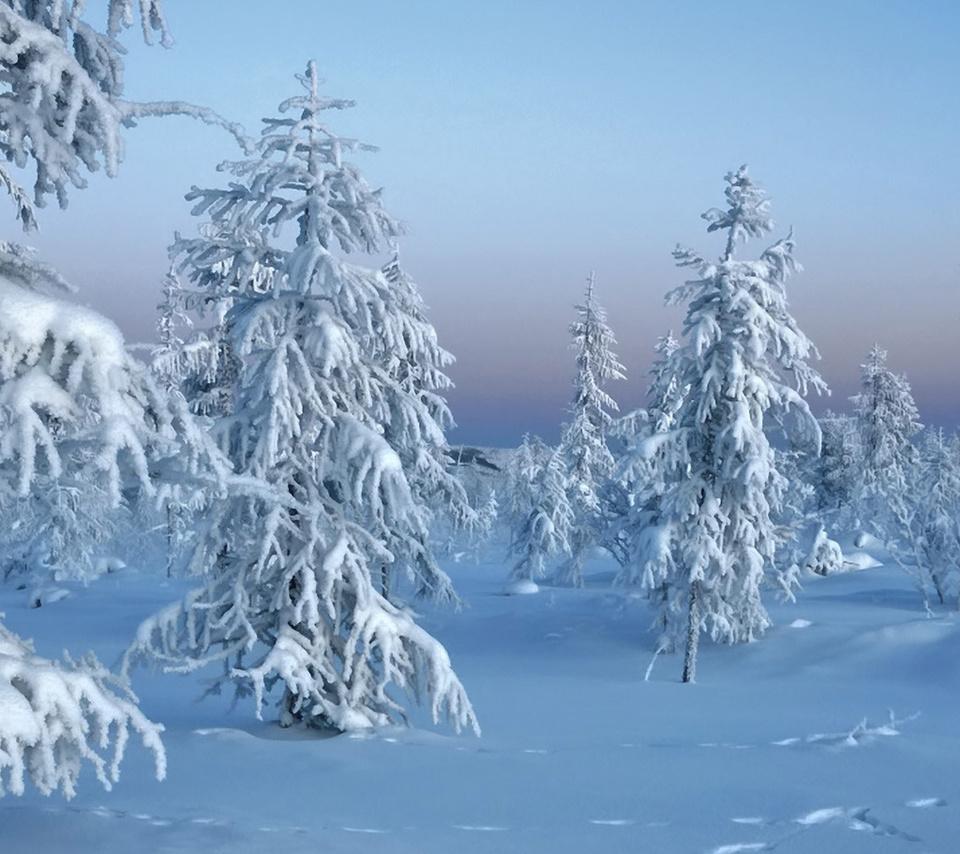 природа, trees in snow, winter, зима, лес, снег