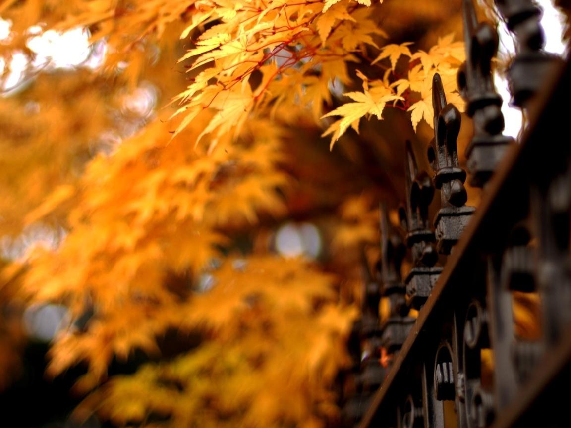 leaves, решетка, nature, листья, Природа, ограда, autumn, осень
