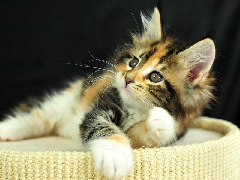 cat, котенок, взгляд, кошка, глаза, котэ