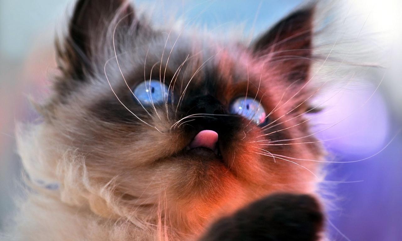 кошка, морда, фон