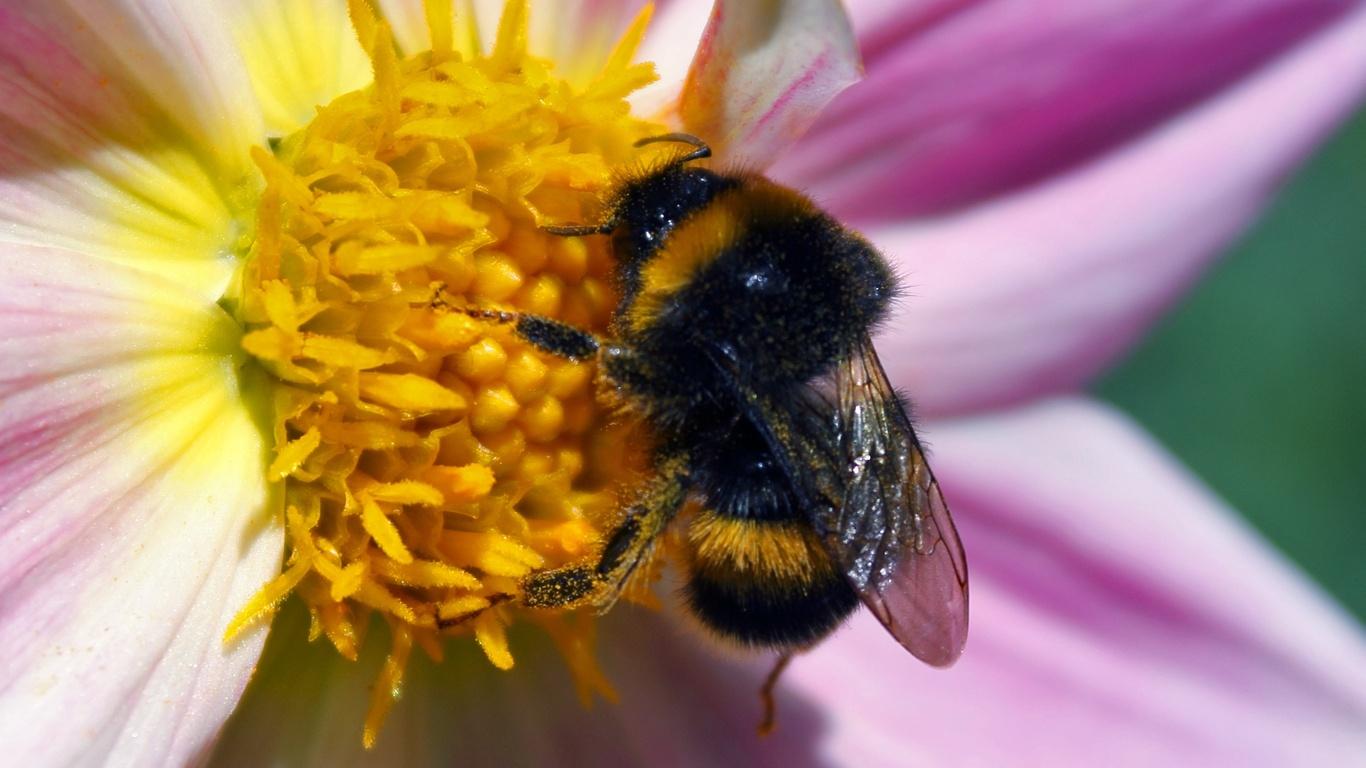 Животные природа макро цветы квіти