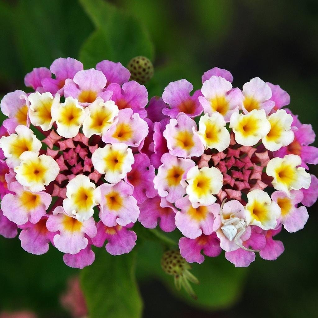 Фото и описание красивых цветов