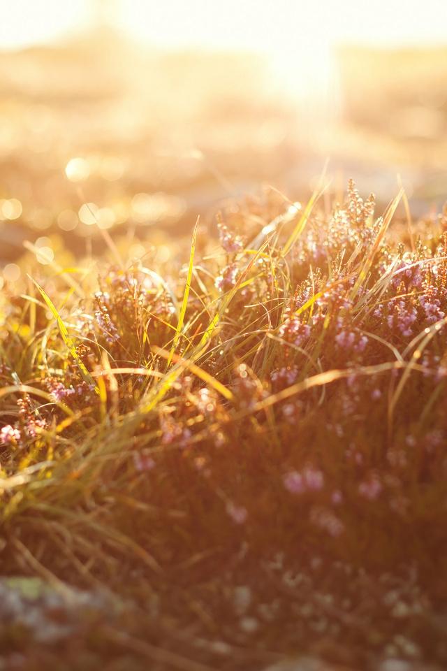 nature, grass, Макро, трава, light, природа, macro, боке, свет, bokeh