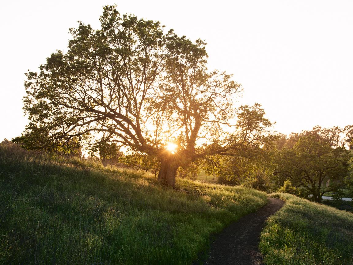дерево, весна, трава, тропа, стежка, солнце, Природа