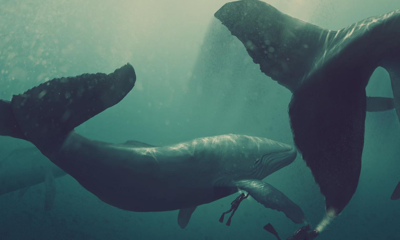 киты, графика, кит, планшет, водолаз, Рисунок, гигант