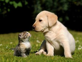 трава, щенок, котенок, собака, Кошка, фон