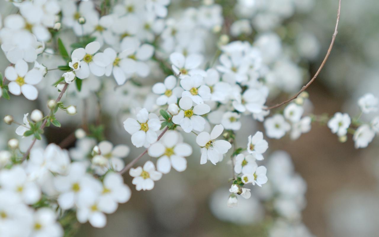 Картинки маленькие цветы 4: dreampics.ru/picture.php?id=43241