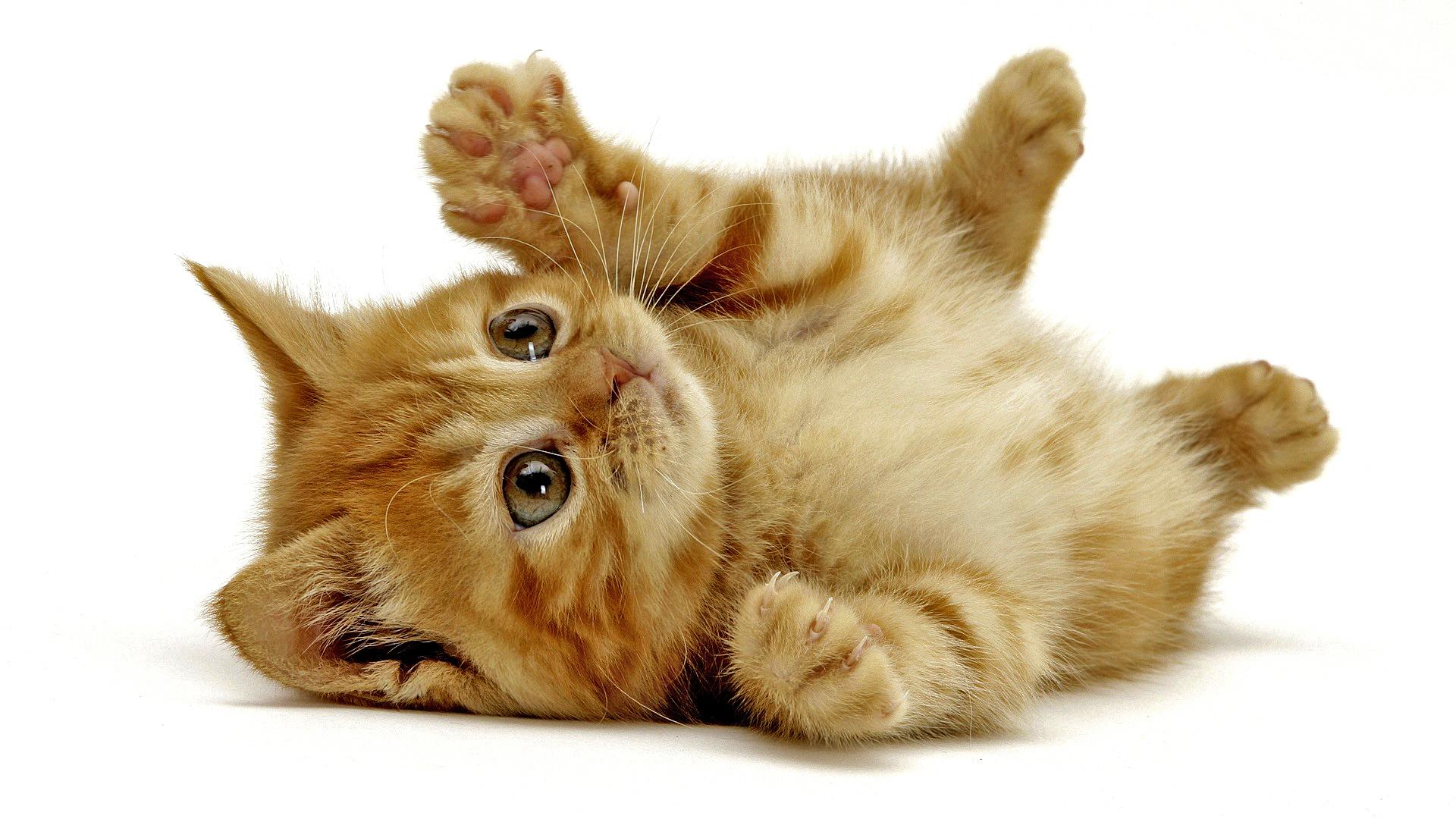 Cartoon Cat Images Stock Photos amp Vectors  Shutterstock